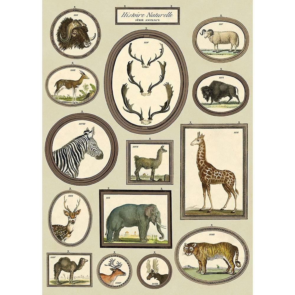 History Animals