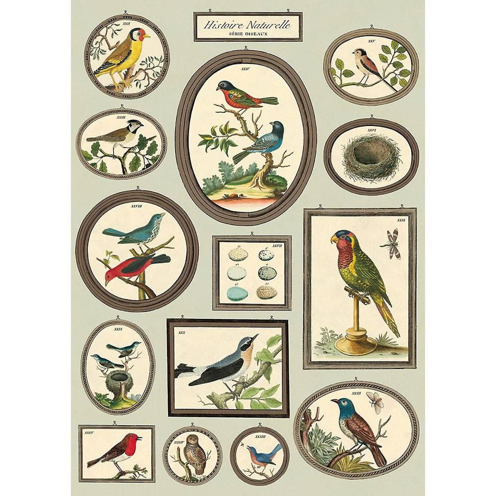 History Birds